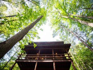 """【施工事例更新】リノベーション/""""森に浮かぶベランダの家""""の画像"""
