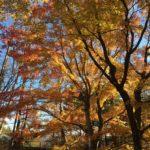千ヶ滝西区リノベーション④の画像